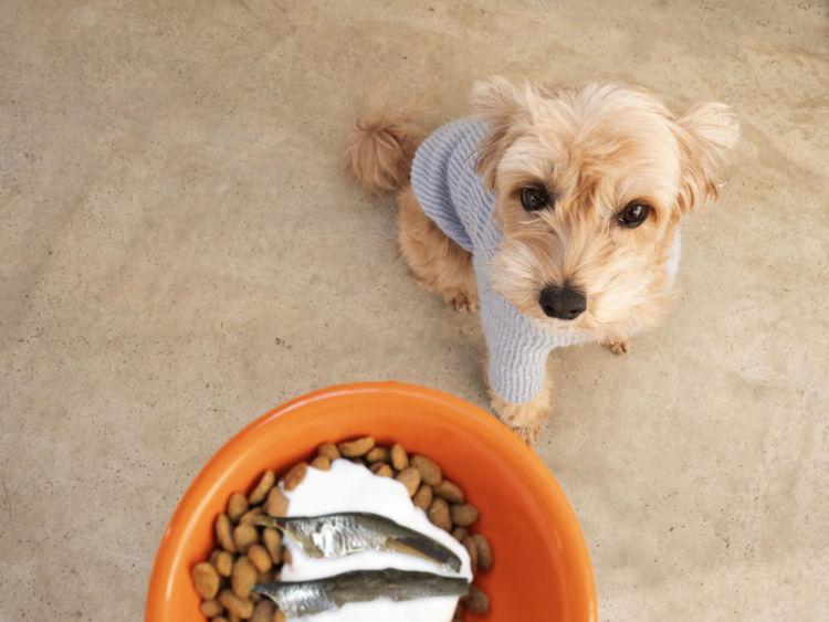 犬に必要なカルシウム、1日に必要な量は?