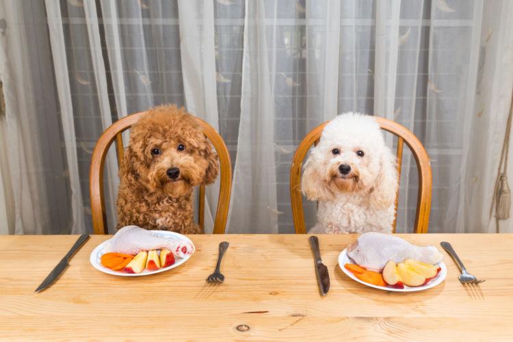 犬にカルシウムを与える場合の注意点(手作り・サプリ)!