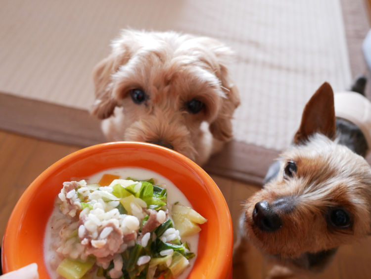 子犬や老犬に手作りご飯を与えても大丈夫?