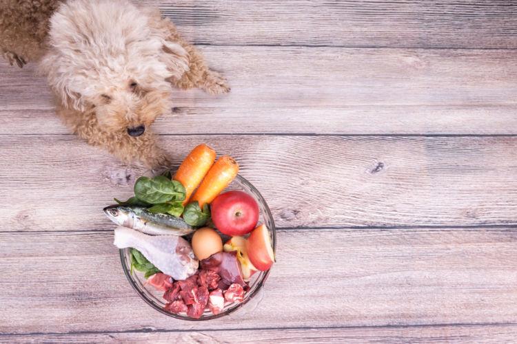 犬に与える手作りご飯(食材)のまとめ