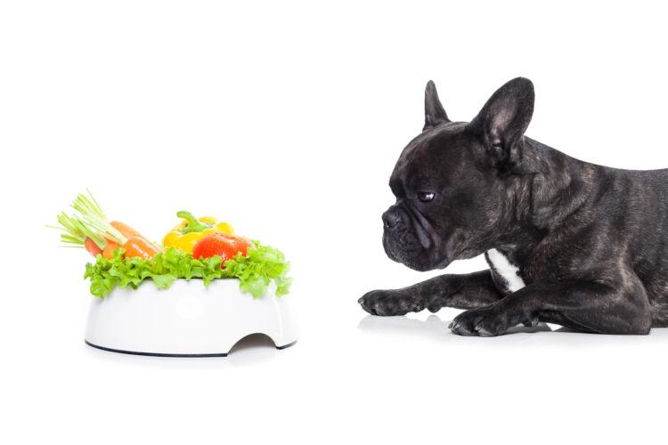 犬に食物繊維を与える際のおすすめの食材やおやつは?