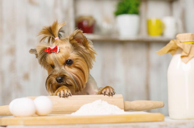 【獣医師監修】犬が小麦粉(生)を食べても大丈夫?アレルギーやグルテンは?実は栄養価も優秀!