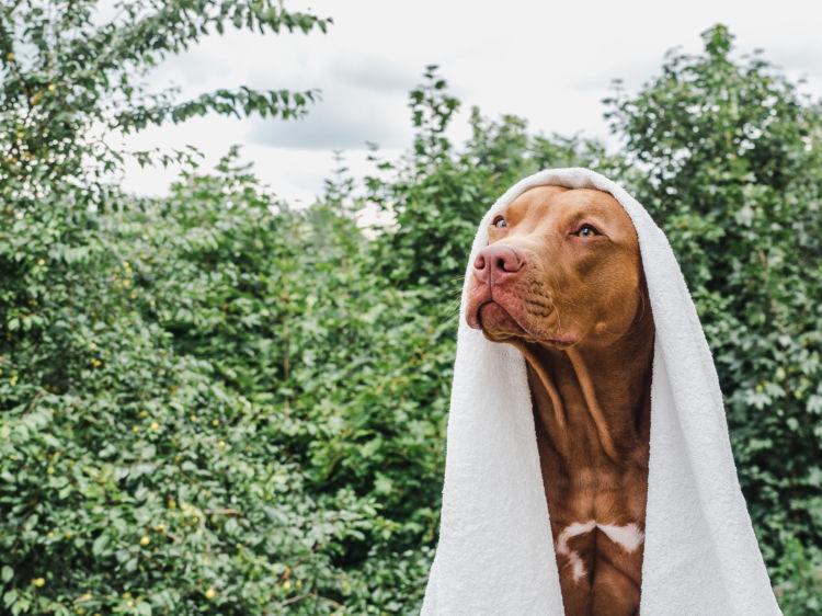 犬のシャンプーの頻度のまとめ