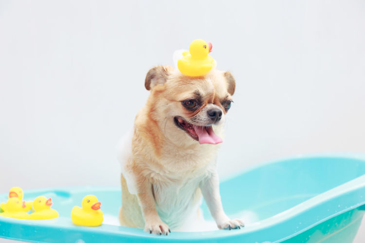 犬のシャンプー、おすすめは?固形石鹸などで代用は可能?