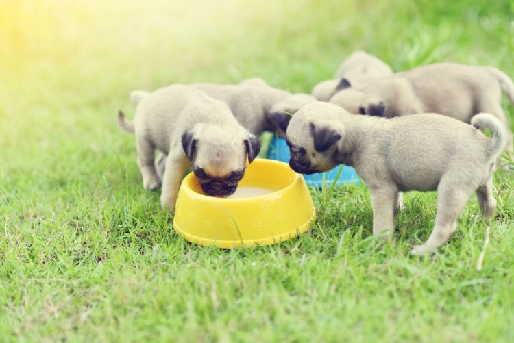 【獣医師監修】犬にカルシウムは必要?1日に必要な量は?子犬や老犬に与える際のポイント、注意点!
