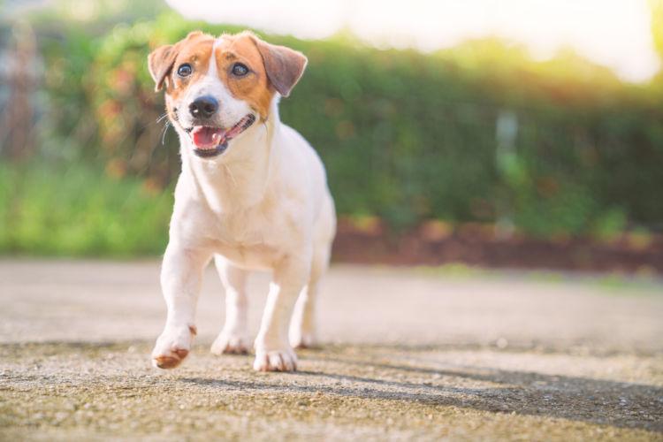 カルシウムは犬の身体のバランスを整える