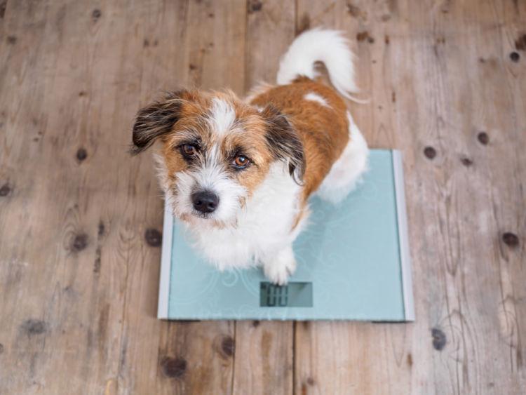 愛犬の減量効果も期待できる?