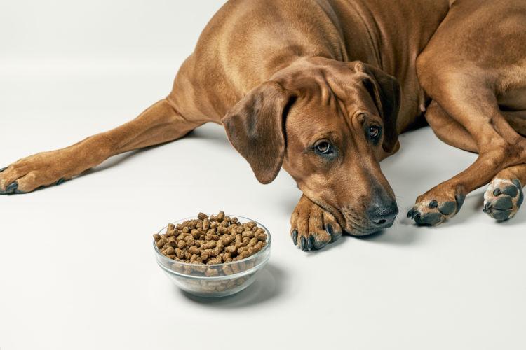 犬 腎臓病 食欲低下