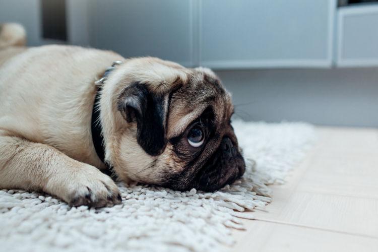 犬 便秘 痩せる 食物繊維