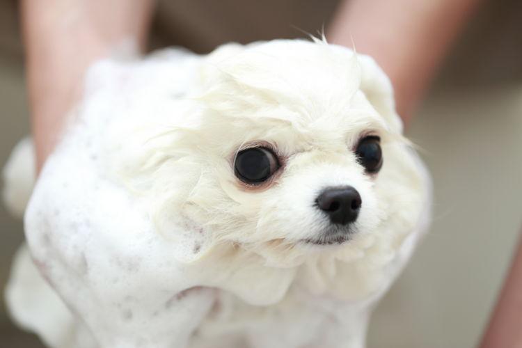 犬のシャンプー【最適な頻度は?】