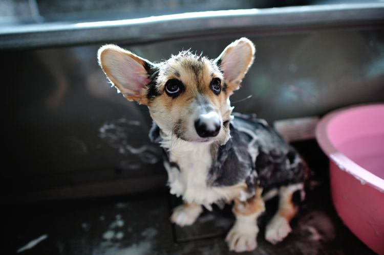 犬のシャンプーの種類や選び方②【長毛用・肌質別・子犬・老犬】