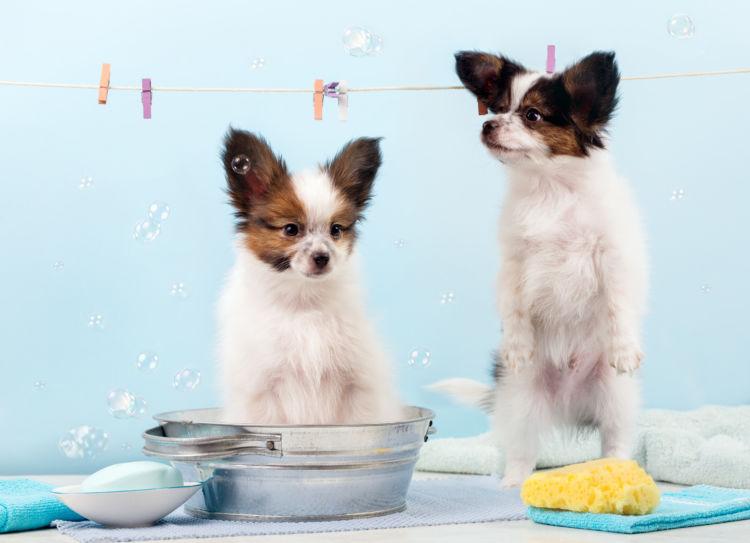 固形石鹸で犬のシャンプーの代用は可能?