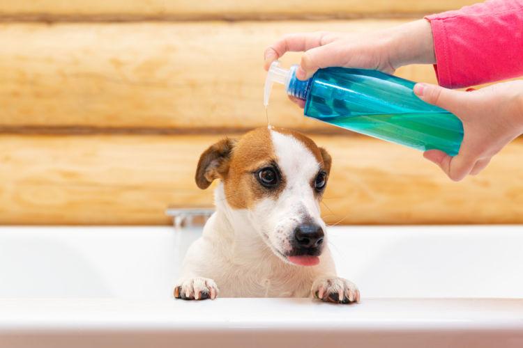 【獣医師・トリマー監修】犬のシャンプーの種類(おすすめ)選び方は?人間用でもOK?ポイントや注意点!