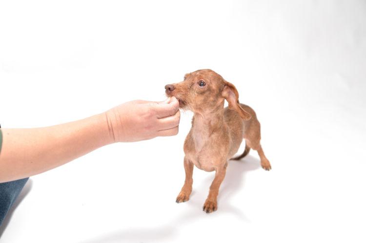 【子犬・老犬】がかまぼこを食べても大丈夫?