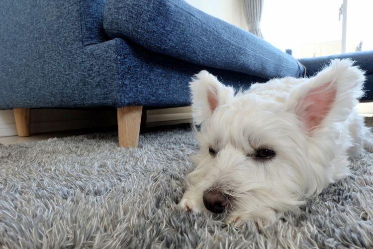 犬の食べ物(食物・フード)アレルギーの予防対策!