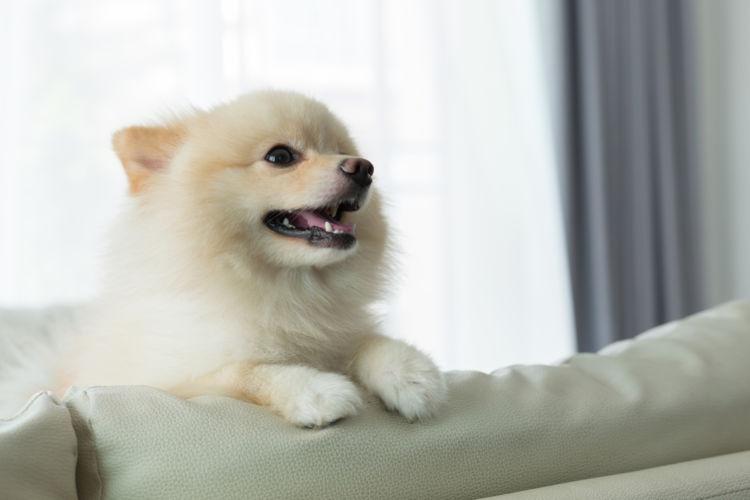 ホタテの【特長】、犬への【効果】は?