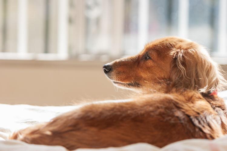 老犬や子犬に必要なビタミンの適量は?