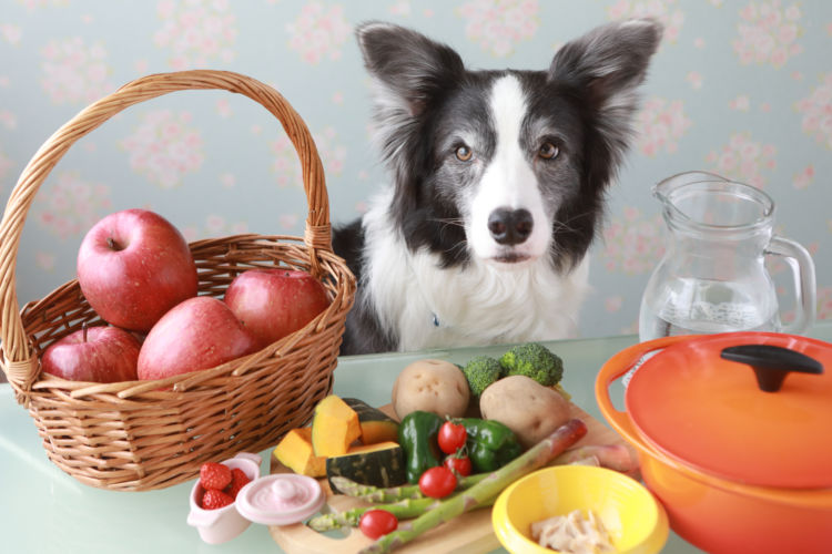 【獣医師監修】犬にビタミンは必要?子犬や老犬、おやつや手作り食など、必要量と注意点を解説!