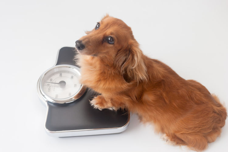 犬が1日に必要とするエネルギーの量(DER)計算方法