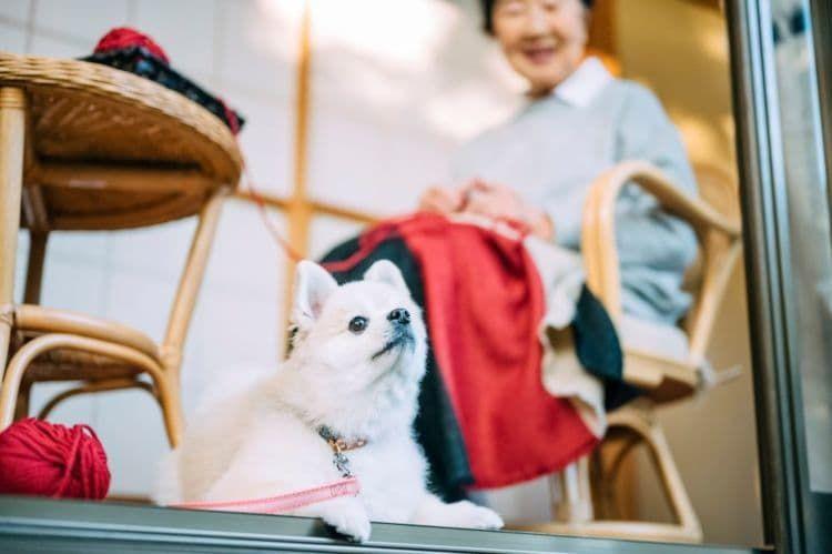 犬が口をパクパクする場合の対処法②【老犬】