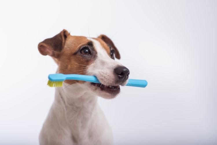 犬の虫歯(う蝕)【まとめ】