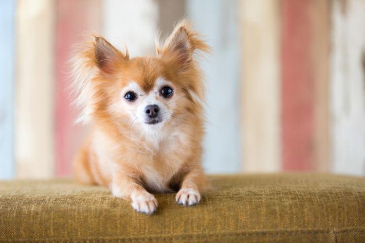 【獣医師監修】犬の「歯石」とは?原因や症状、治療、予防法は?ひどい場合、家で歯石を取っても大丈夫?