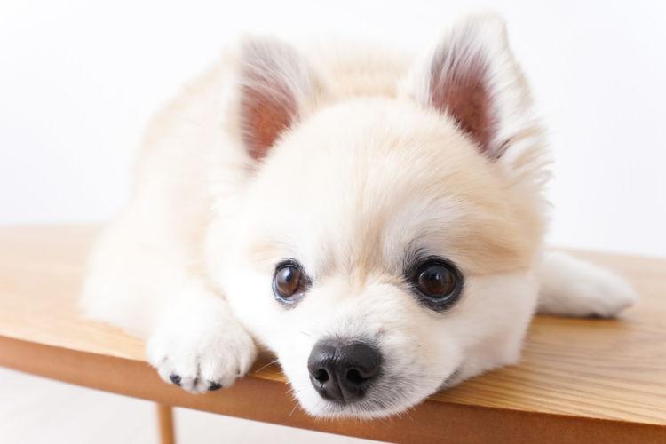 犬の歯石【原因は?】