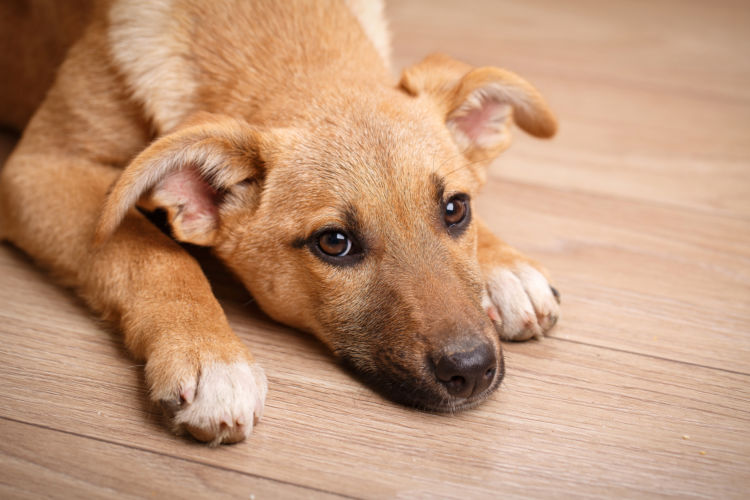犬の歯石【症状(軽度・重度)】