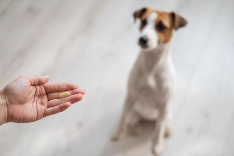 犬の歯石【治療費(手術費用)・治療薬】