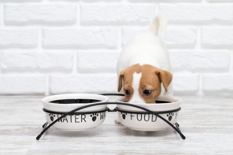 犬の歯石【食事・予防対策は?】