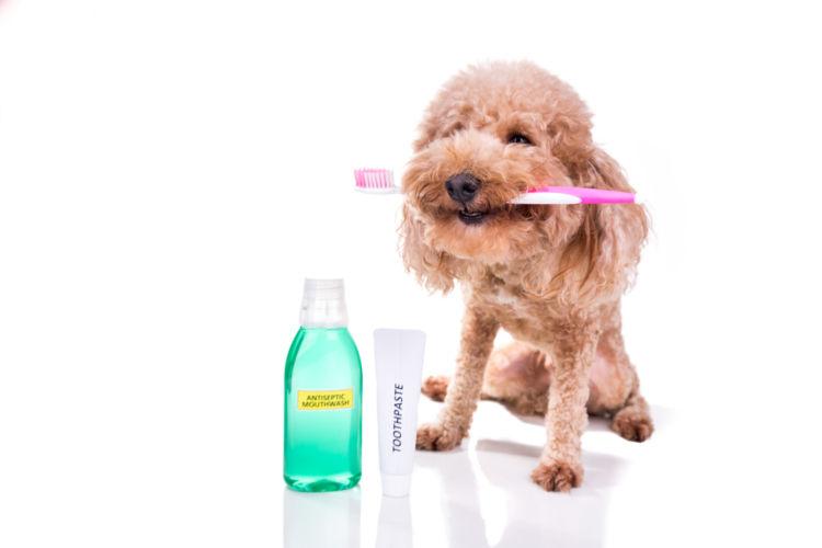 犬の歯【歯ブラシ・歯磨き粉・歯磨きガムなど、グッズの選び方は?】