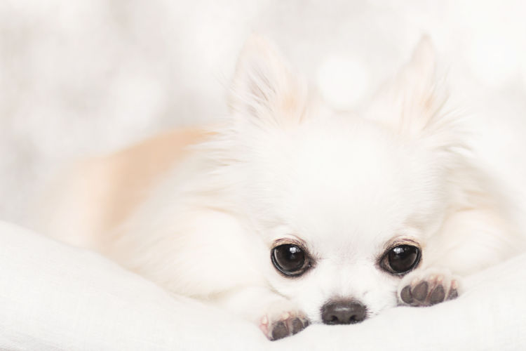 子犬・老犬の歯【注意点・ケア方法は?】