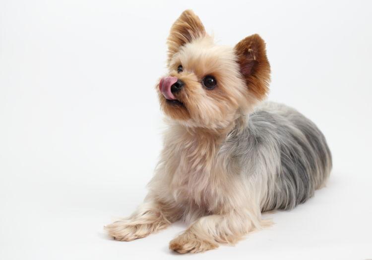 【獣医師監修】犬がドッグフードを食べない理由は?その対処法や工夫のポイントを解説!