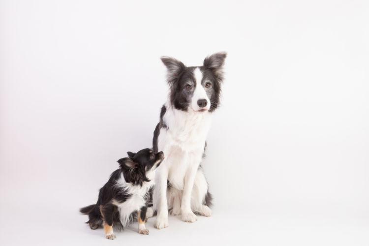 犬種別(小型犬・大型犬)ドッグフードを食べない場合の対処法は?