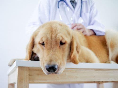 犬が便秘になった【緊急を要する症状、注意点は?】