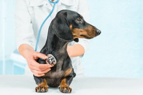 犬が便秘になった【応急処置や対処法、予防方法は?】