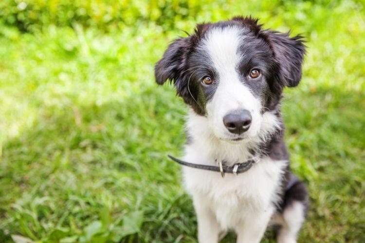 【獣医師監修】犬は熱中症になりやすい?初期症状や後遺症、応急処置、治療法、予防対策!