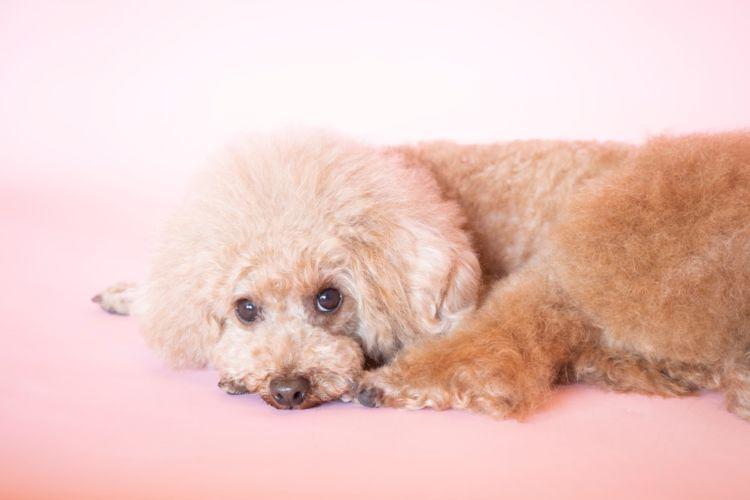 犬が熱中症になると死亡したり後遺症が残る可能性がある?繰り返す場合は?