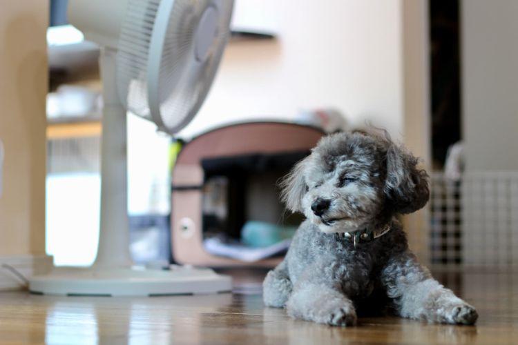 犬が熱中症から回復する期間や予防対策、グッズは?