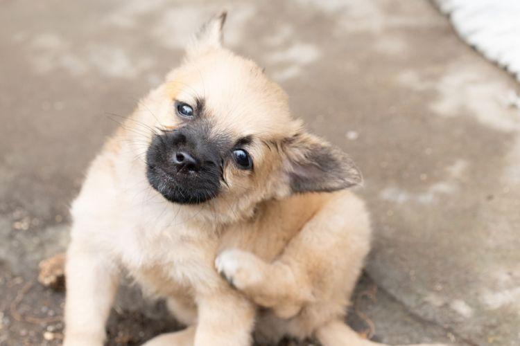 子犬の歯の生え変わり【注意すべき病気と予防対策は?】