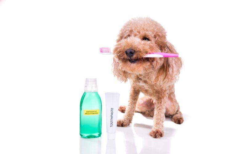 犬の歯磨き粉【おすすめの市販の歯磨き粉・代用品(手作り)は?】