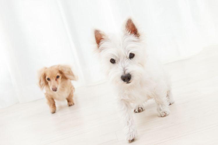 犬の歯磨きガム【いつから(何歳)必要?使い方・頻度(回数)・時間は?】