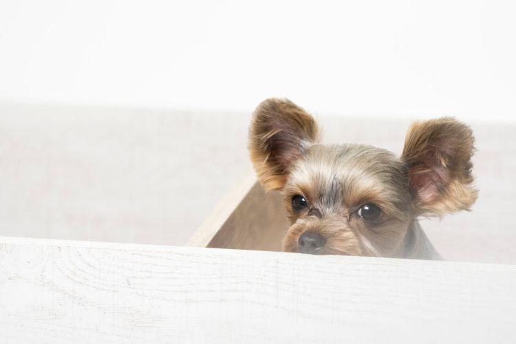 犬の歯磨きガム【ガムを噛まない場合の与え方のコツやポイント、注意点!】