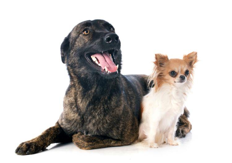子犬・老犬の歯磨きガム【注意点・ケア方法は?】