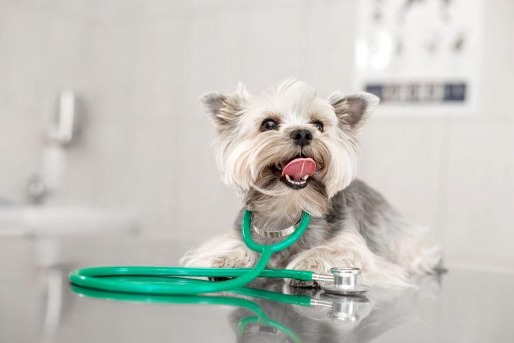 犬の虫歯・歯周病【虫歯(う蝕)や歯周病になってしまった場合の治療法・治療費は?】