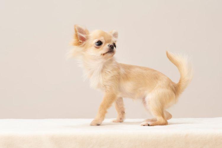 犬の乳歯【永久歯との違い(大きさ・形)、見分け方(確認方法)は?】