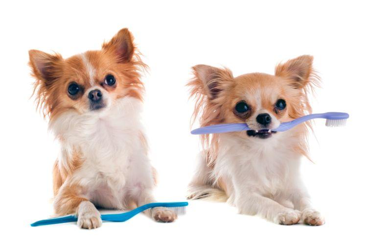 犬の歯ブラシ【犬専用の歯ブラシは必要?歯磨きしないとダメ?】