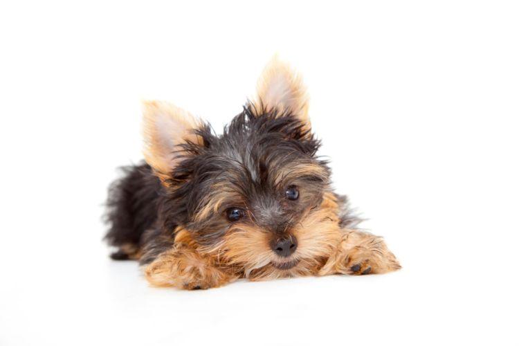 犬の歯ブラシ【いつから(何歳)必要?頻度(回数)・時間は?】