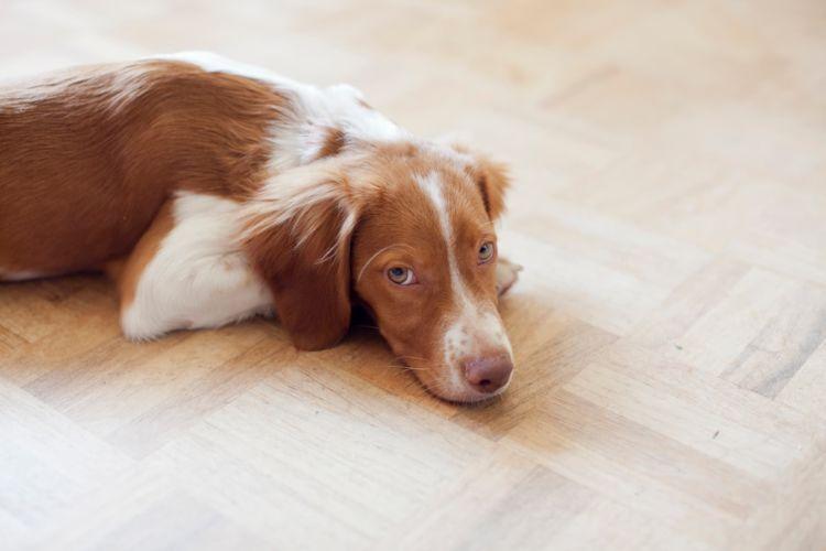 犬の歯ブラシ【うがい薬や歯ブラシを誤飲した場合の対処法や注意点!】