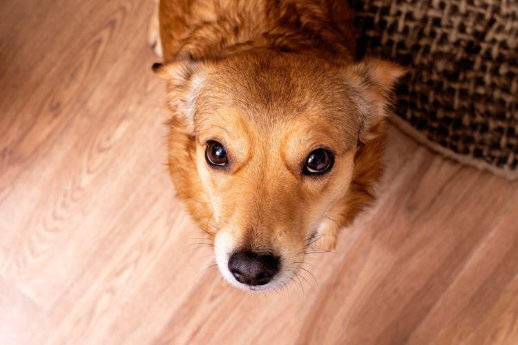 犬の歯ブラシ【まとめ】